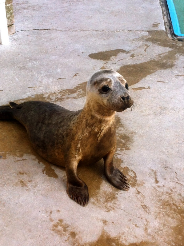 Inpatient at the Seal Hospital